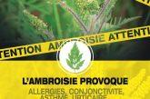 Lutte contre l'ambroisie
